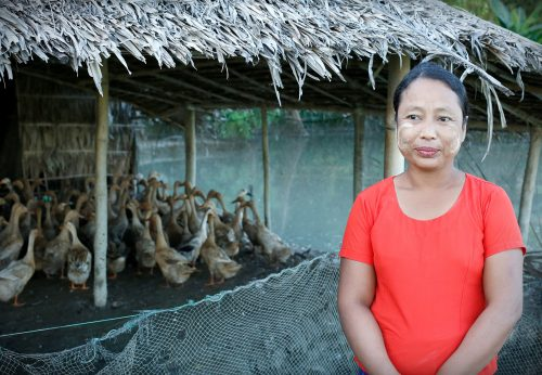 Aasialainen nainen katsoo kuvan etualalla kameraan hanhilauman ollessa aitauksessa takana.