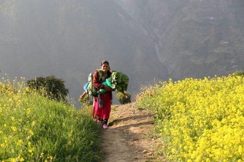 Aasialainen nainen kuljettaa sylissään vihanneksia peltojen välissä kulkevalla hiekkatiellä.